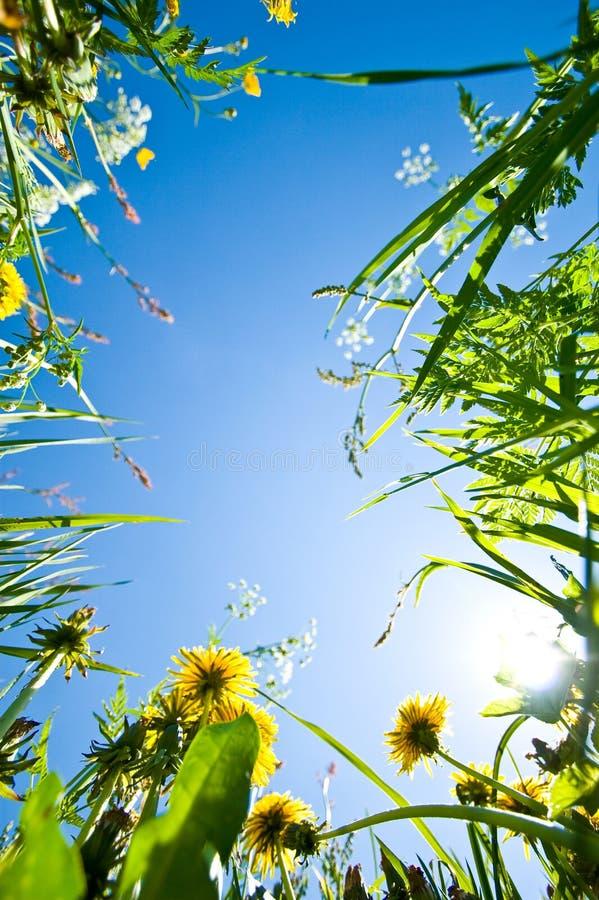Σύνορα λουλουδιών στοκ φωτογραφία με δικαίωμα ελεύθερης χρήσης