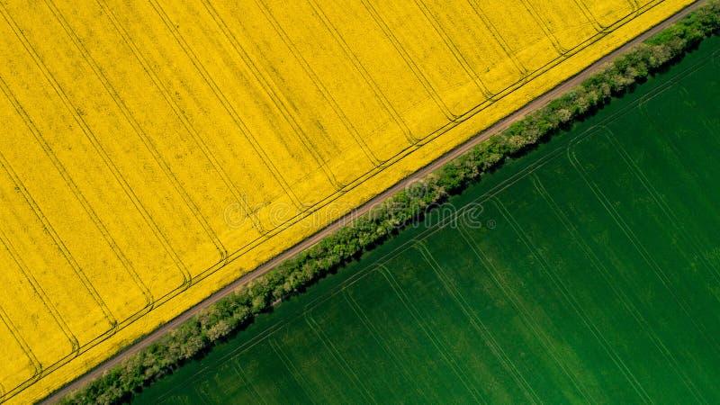 Σύνορα μεταξύ πράσινων και τομέων ενός κίτρινων ελαίου κολζά στοκ εικόνα
