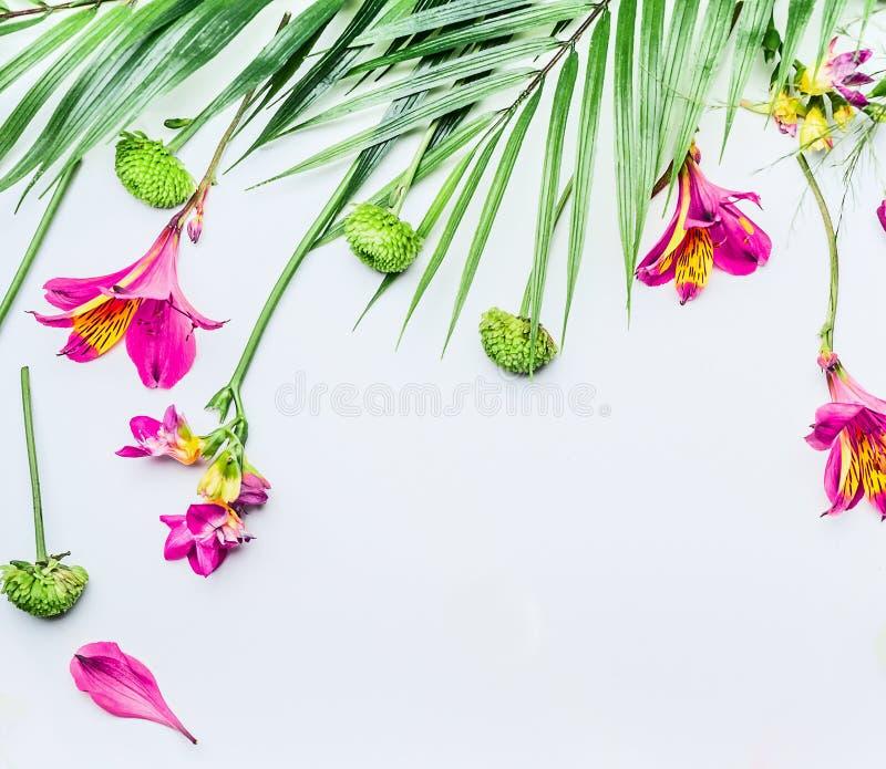 Σύνορα με τα τροπικά φύλλα και τα εξωτικά λουλούδια στο άσπρο υπόβαθρο, τοπ άποψη r Floral πλαίσιο r στοκ φωτογραφία με δικαίωμα ελεύθερης χρήσης