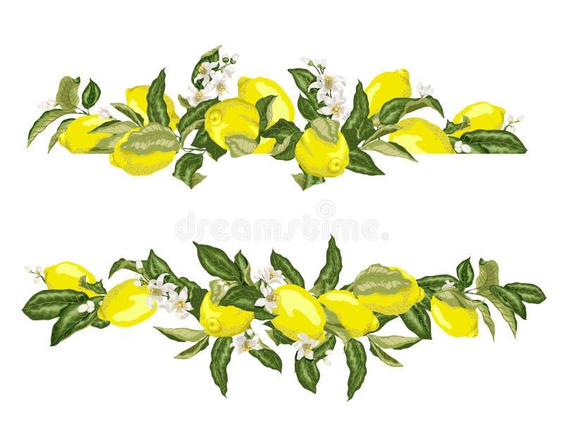 Σύνορα πλαισίων προτύπων ασβέστη με τα εσπεριδοειδή και τα λουλούδια ελεύθερη απεικόνιση δικαιώματος