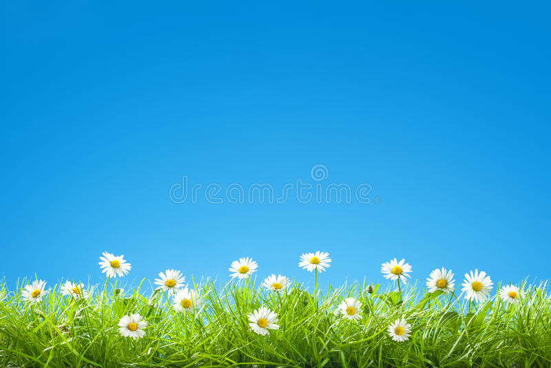 Σύνορα των γλυκών μαργαριτών στην πράσινη χλόη με το σαφή μπλε ουρανό στοκ φωτογραφίες