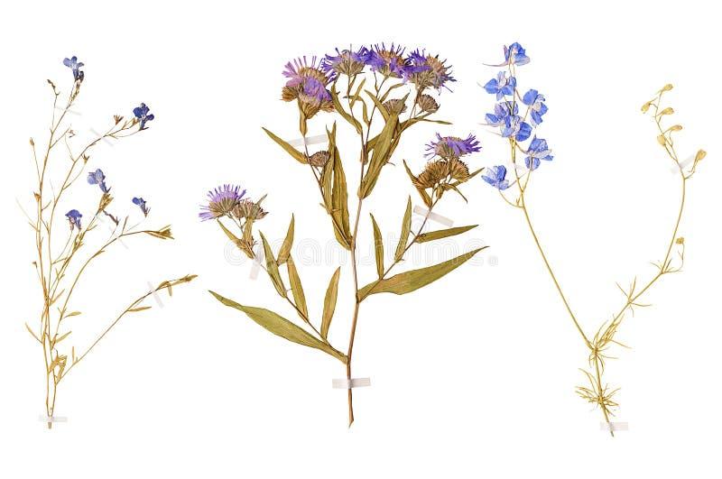 Σύνολο άγριων ξηρών πιεσμένων λουλουδιών και φύλλων στοκ φωτογραφία