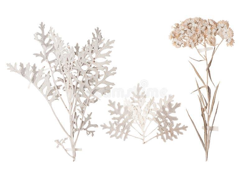 Σύνολο άγριων ξηρών πιεσμένων λουλουδιών και φύλλων στοκ εικόνες