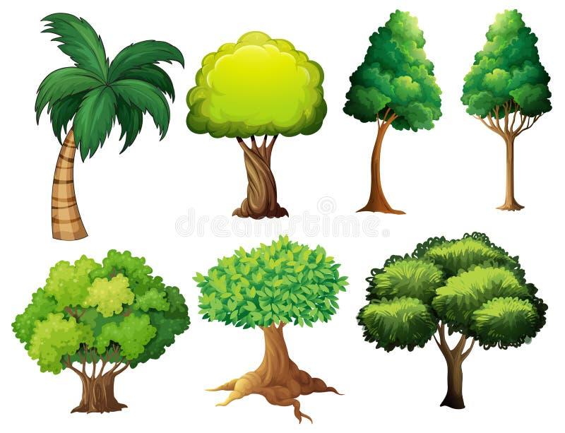 Σύνολο δέντρων διανυσματική απεικόνιση