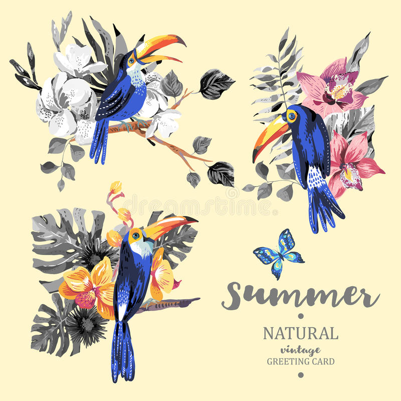 Σύνολο εκλεκτής ποιότητας θερινών διανυσματικού toucan, πεταλούδων και λουλουδιών ελεύθερη απεικόνιση δικαιώματος