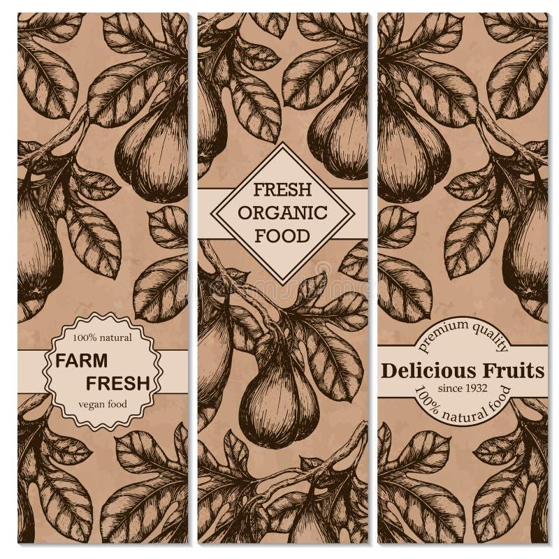 Σύνολο εκλεκτής ποιότητας συρμένων χέρι εμβλημάτων σκίτσων με τα σύκα Εκλεκτής ποιότητας σχέδιο τροφίμων eco ελεύθερη απεικόνιση δικαιώματος