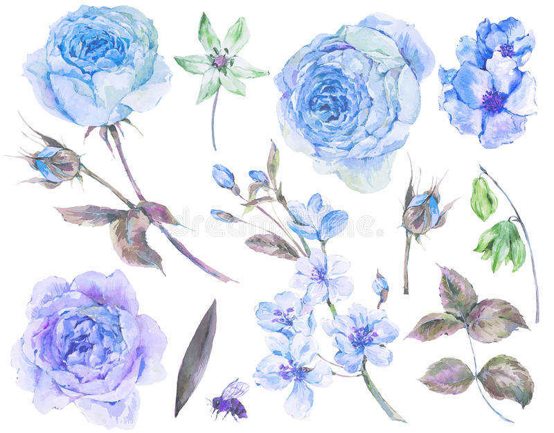 Σύνολο εκλεκτής ποιότητας φύλλων τριαντάφυλλων watercolor, ανθίζοντας κλάδοι διανυσματική απεικόνιση