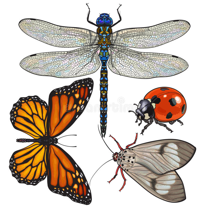 Σύνολο εντόμων όπως τη λιβελλούλη, την πεταλούδα, τη λαμπρίτσα και το σκώρο ελεύθερη απεικόνιση δικαιώματος