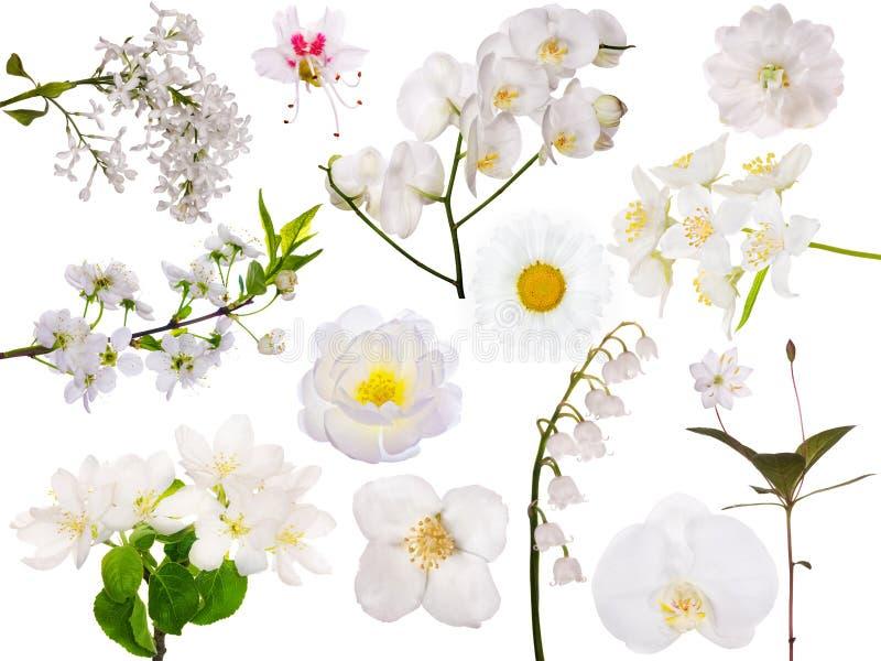 Σύνολο απομονωμένων άσπρων λουλουδιών στοκ εικόνες με δικαίωμα ελεύθερης χρήσης