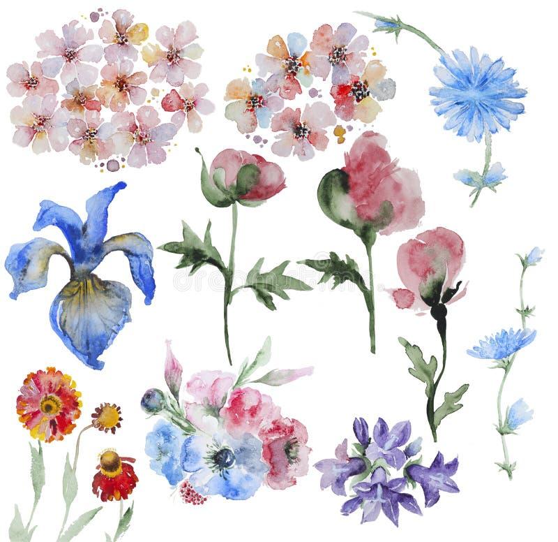 Σύνολο ζωγραφισμένων στο χέρι λουλουδιών watercolor διανυσματική απεικόνιση