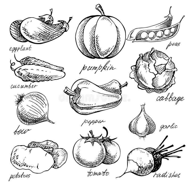 Σύνολο διάφορων doodles, συρμένα χέρι λαχανικά διανυσματική απεικόνιση