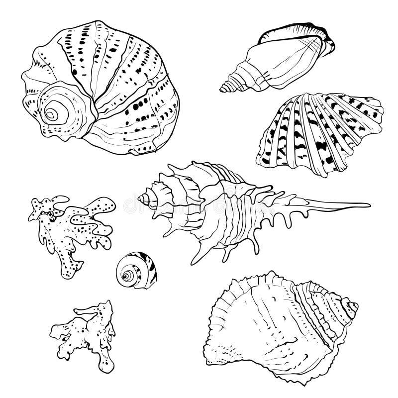 Σύνολο διανυσματικών συρμένων χέρι θαλασσινών κοχυλιών ελεύθερη απεικόνιση δικαιώματος