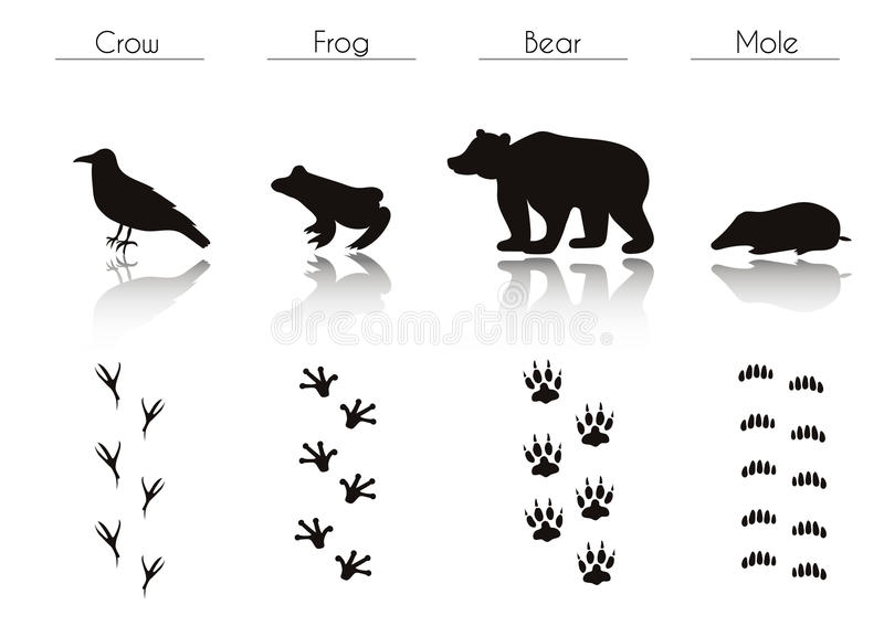 Σύνολο μαύρων δασικών σκιαγραφιών ζώων και πουλιών: Κόρακας, βάτραχος, Β ελεύθερη απεικόνιση δικαιώματος