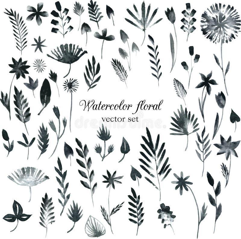 Σύνολο μαύρων floral στοιχείων watercolor διανυσματική απεικόνιση