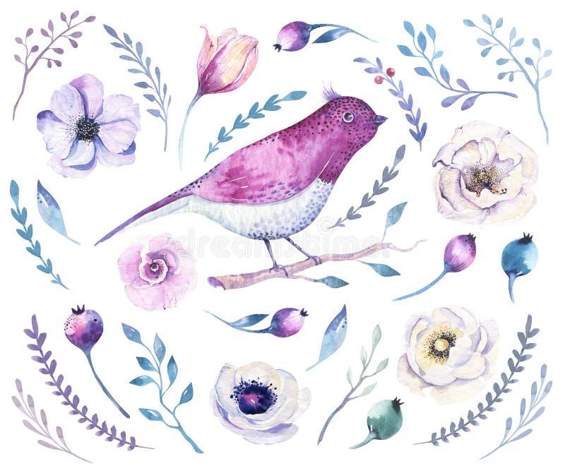 Σύνολο λουλουδιών boho Watercolor Διακόσμηση floral β άνοιξης ή καλοκαιριού ελεύθερη απεικόνιση δικαιώματος