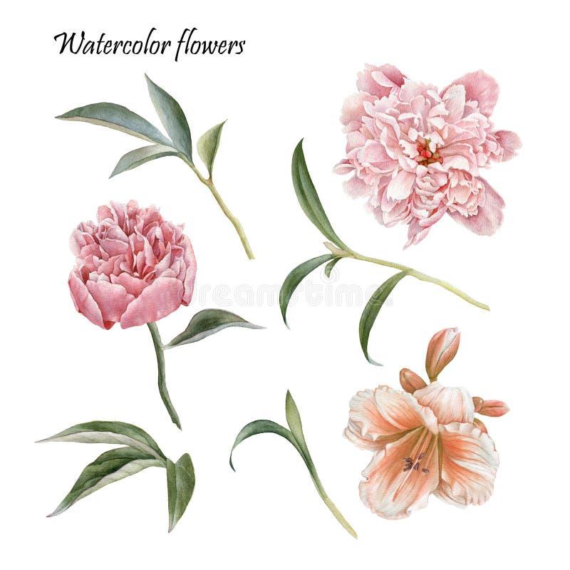 Σύνολο λουλουδιών peonies, κρίνου και φύλλων ελεύθερη απεικόνιση δικαιώματος