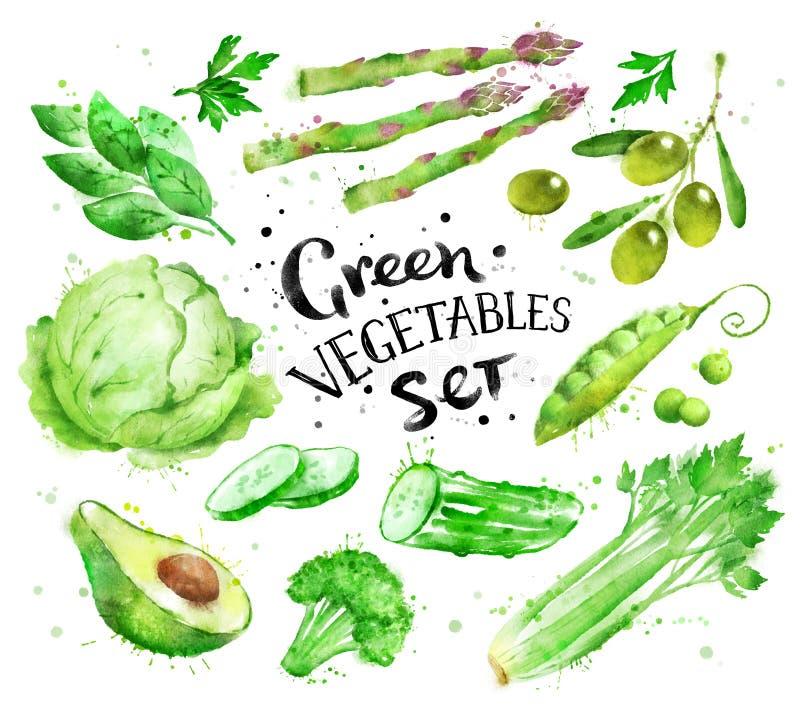 Σύνολο πράσινων λαχανικών διανυσματική απεικόνιση