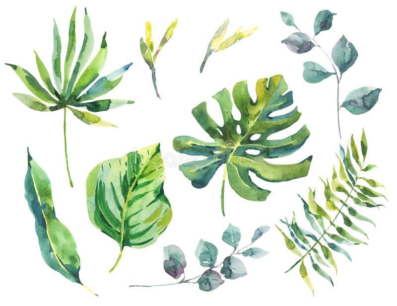 Σύνολο πράσινων τροπικών φύλλων watercolor απεικόνιση αποθεμάτων