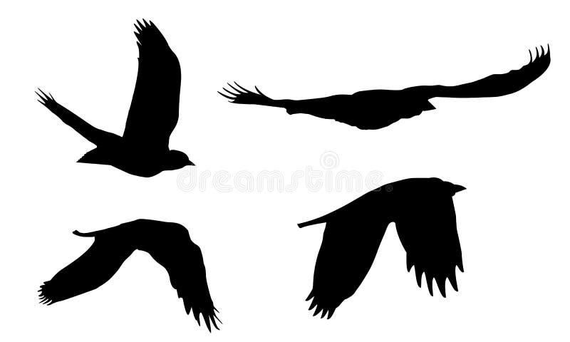 Σύνολο ρεαλιστικών απεικονίσεων των σκιαγραφιών των πετώντας πουλιών του θηράματος που απομονώνονται διανυσματική απεικόνιση