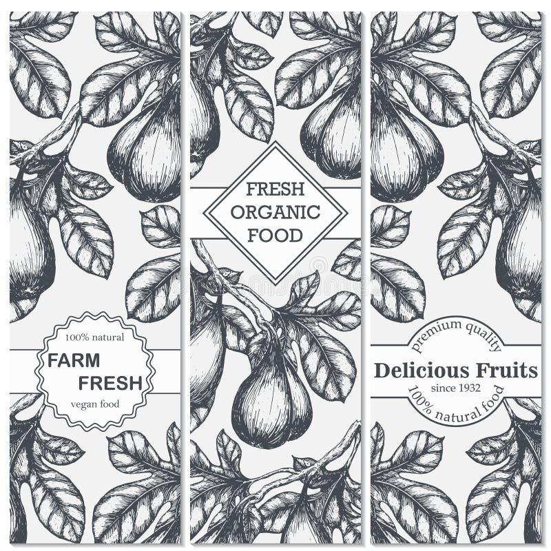 Σύνολο συρμένων χέρι εμβλημάτων σκίτσων με τα σύκα Εκλεκτής ποιότητας σχέδιο τροφίμων eco απεικόνιση αποθεμάτων