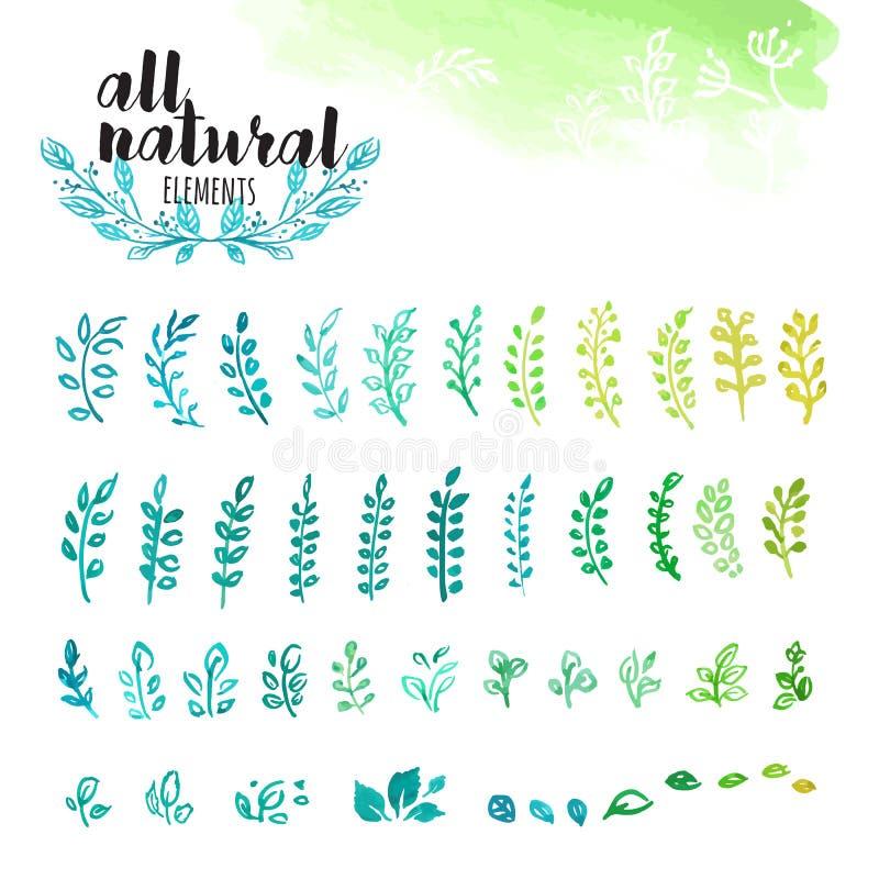 Σύνολο συρμένων χέρι φυσικών στοιχείων watercolor, φύλλων και κλάδων δέντρων διανυσματική απεικόνιση