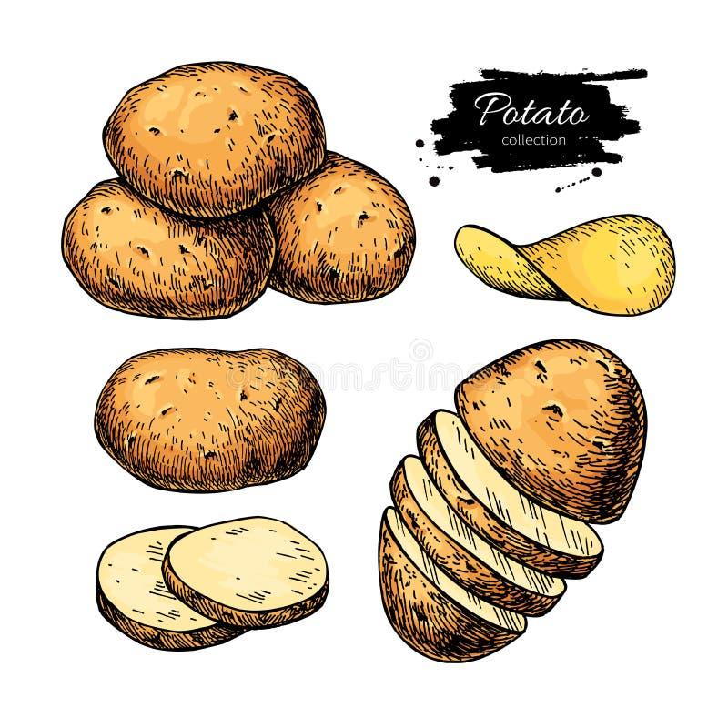Σύνολο σχεδίων πατατών Απομονωμένος διάνυσμα σωρός πατατών, που τεμαχίζεται διανυσματική απεικόνιση