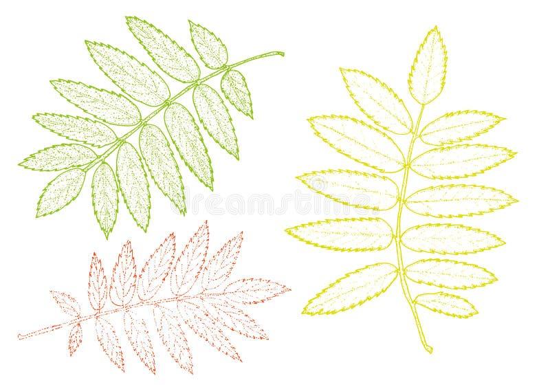 Σύνολο του Rowan φύλλων σε ένα άσπρο υπόβαθρο eps10 να γεμίσει προτύπων λουλουδιών πορτοκαλιά rac ric ράβοντας ριγωτή διανυσματικ διανυσματική απεικόνιση