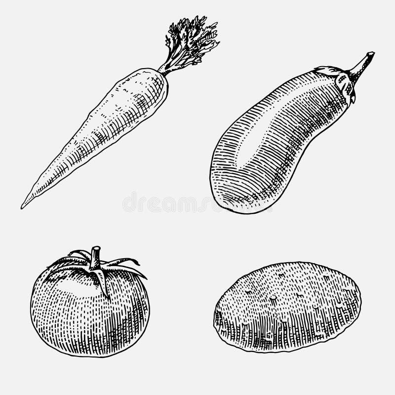 Σύνολο χεριού που σύρεται, χαραγμένα λαχανικά, χορτοφάγα τρόφιμα, εγκαταστάσεις, εκλεκτής ποιότητας να φανεί καρότο, πατάτα και ν απεικόνιση αποθεμάτων