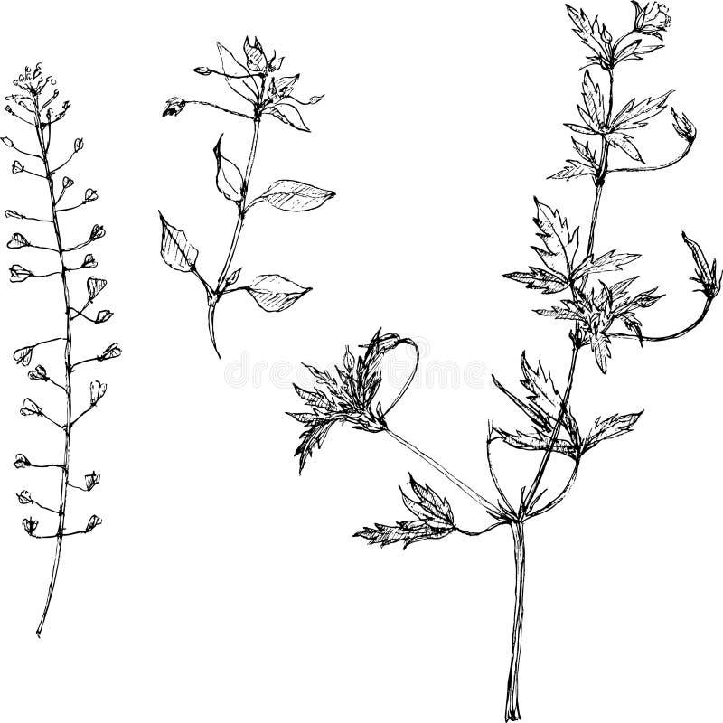 Σύνολο χορταριών και φύλλων σχεδίων μολυβιών απεικόνιση αποθεμάτων