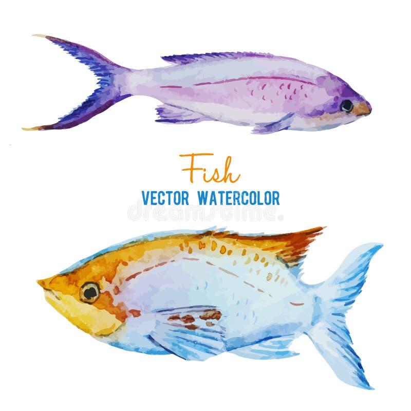 Σύνολο ψαριών απεικόνιση αποθεμάτων