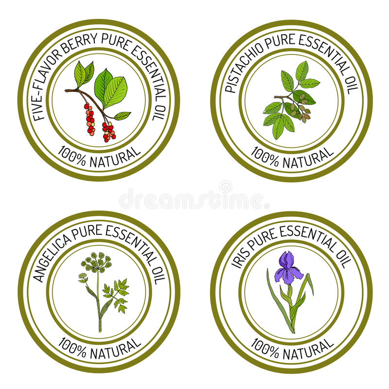 Σύνολο angelica ετικετών ουσιαστικού πετρελαίου, ίριδα, φυστίκι, πέντε-γεύση-μούρο διανυσματική απεικόνιση