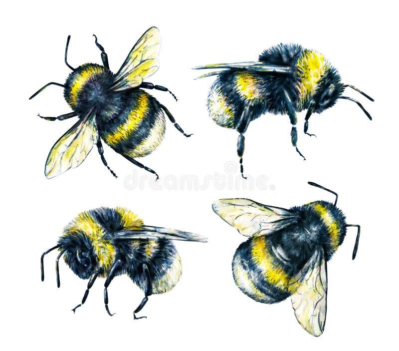 Σύνολο bumblebees σε ένα άσπρο υπόβαθρο τράπεζες που σύρουν το τύλιγμα watercolor δέντρων ποταμών ανθίσματος Τέχνη εντόμων Χειροτ ελεύθερη απεικόνιση δικαιώματος