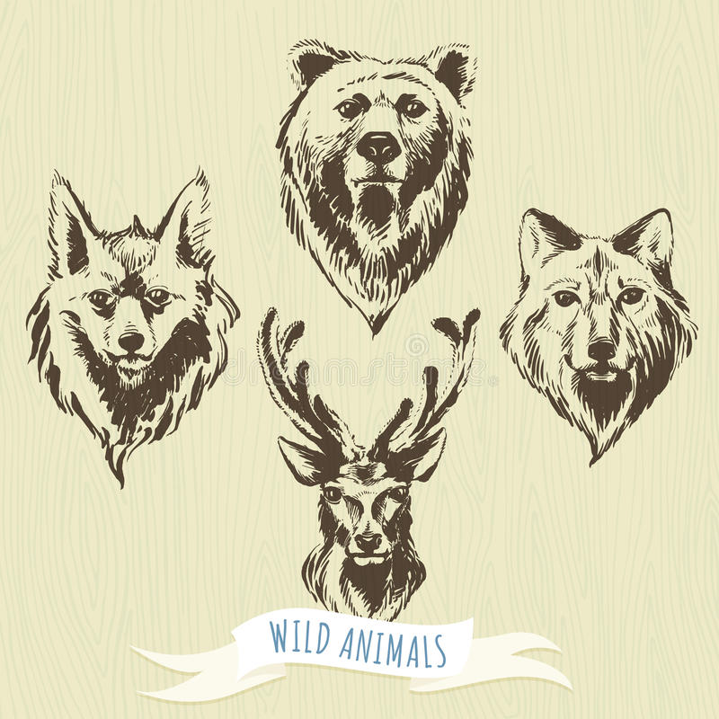 Σύνολο hand-drawn δασικών ζώων δεικτών: λύκος, αρκούδα, ελάφια, αλεπού ελεύθερη απεικόνιση δικαιώματος