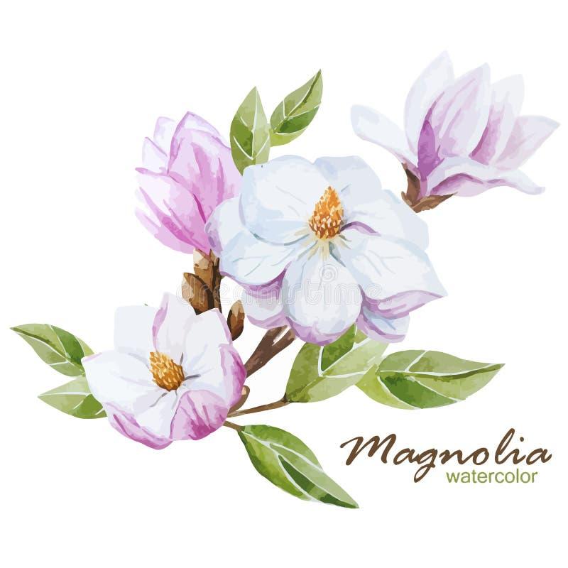 Σύνολο Magnolia ελεύθερη απεικόνιση δικαιώματος