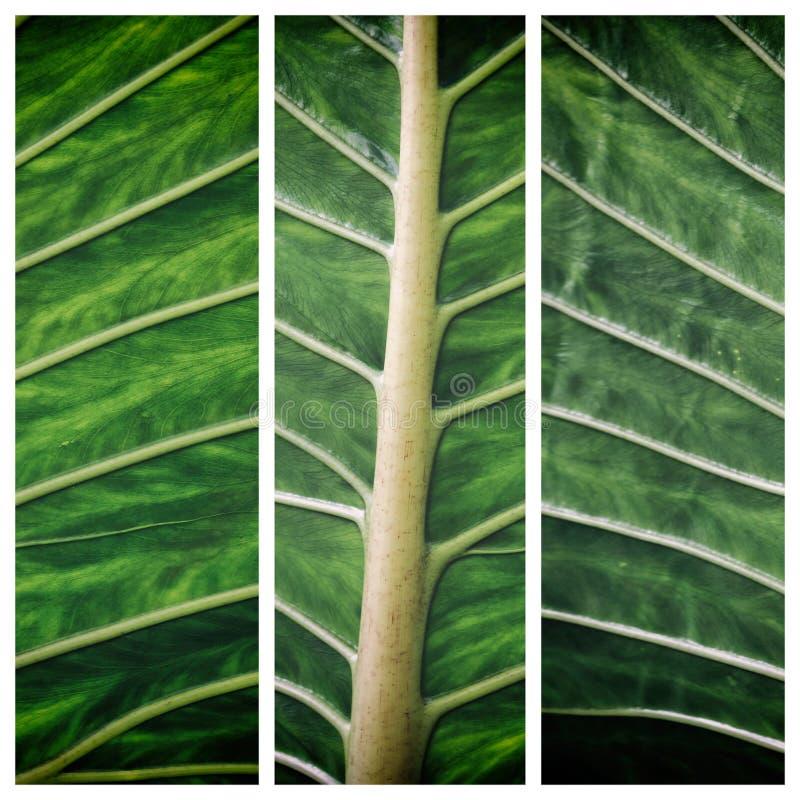 σύσταση άδειας πράσινος φυσικός ανασκόπ&eta Τρίπτυχο για το εγχώριο ντεκόρ στοκ εικόνα με δικαίωμα ελεύθερης χρήσης