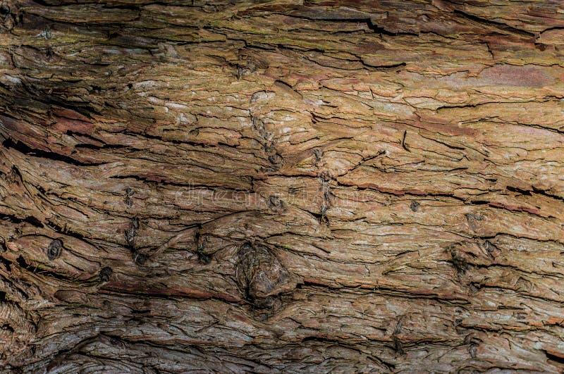 Σύσταση δέντρου στοκ εικόνα