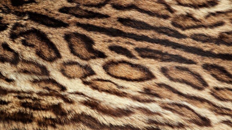 Σύσταση γουνών λεοπαρδάλεων, πραγματική γούνα στοκ εικόνα