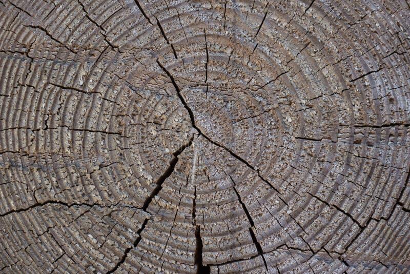 Σύσταση ενός καφετιού στρογγυλού ξύλινου κούτσουρου στοκ φωτογραφίες