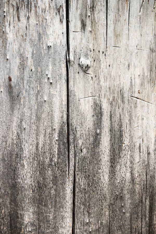 Σύσταση ενός παλαιού δέντρου στοκ φωτογραφία με δικαίωμα ελεύθερης χρήσης