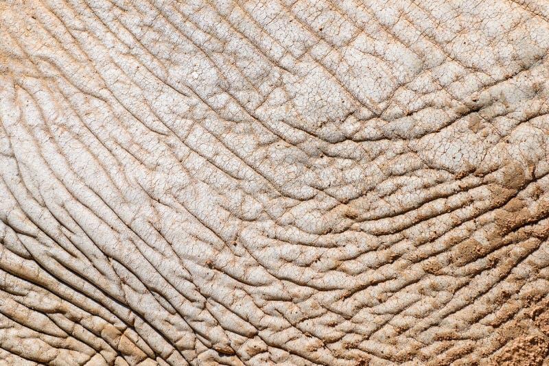 Σύσταση δερμάτων ελεφάντων στοκ εικόνες
