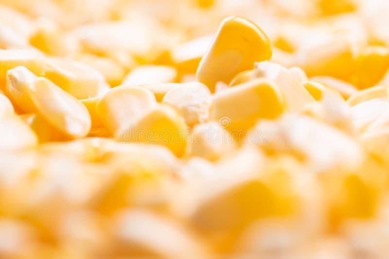 Σύσταση καλαμποκιού Κίτρινα δημητριακά ως υπόβαθρο στοκ εικόνες