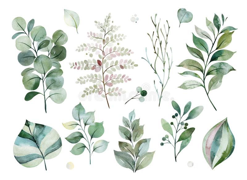 σύσταση με τα πράσινα, κλάδος, φύλλα, φύλλα φτερών, φύλλωμα ελεύθερη απεικόνιση δικαιώματος