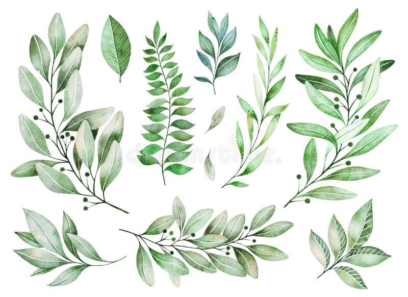 Σύσταση με τα πράσινα, κλάδος, φύλλα, φύλλα φτερών, φύλλωμα απεικόνιση αποθεμάτων