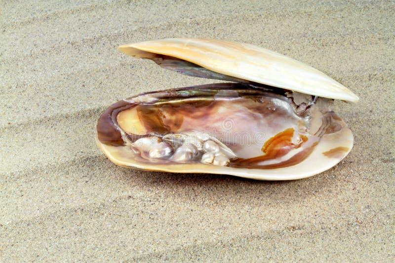 Σύσταση μητέρων του μαργαριταριού με τα πραγματικά μαργαριτάρια σε ένα κοχύλι θάλασσας στοκ φωτογραφίες