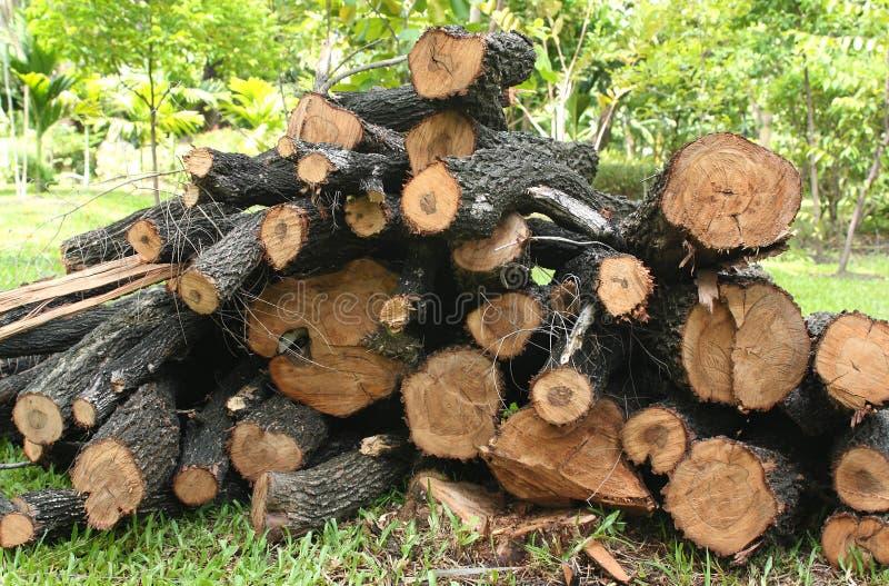 Σύσταση ξυλείας στοκ εικόνα