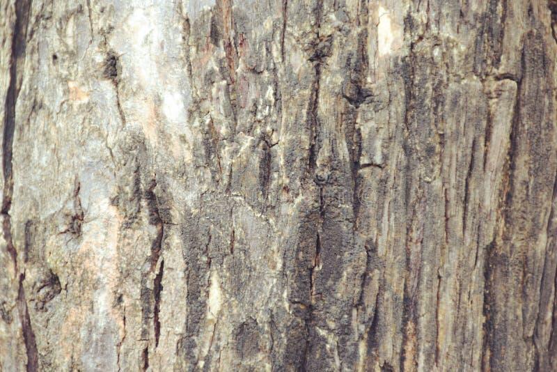 Σύσταση ξύλινου στενού επάνω υποβάθρου στοκ εικόνα