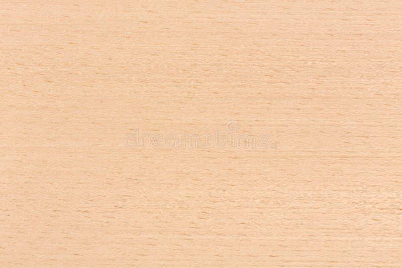 Σύσταση ξύλου οξιών στη μακροεντολή στοκ φωτογραφία με δικαίωμα ελεύθερης χρήσης