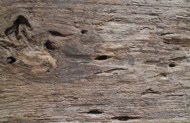Σύσταση της ξύλινης χρήσης φλοιών ως φυσική ανασκόπηση στοκ εικόνα με δικαίωμα ελεύθερης χρήσης