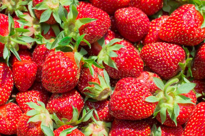 Σύσταση της φράουλας στοκ εικόνα με δικαίωμα ελεύθερης χρήσης