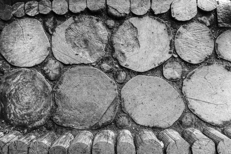 Σύσταση του δάσους Παλαιοί κορμοί δέντρων στοκ φωτογραφίες με δικαίωμα ελεύθερης χρήσης